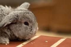 rabbit_homepage_slider_image