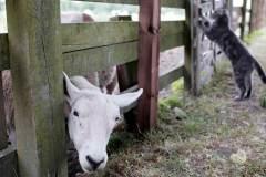 Newham Grange Leisure Farm in Coulby Newham. Photograph: Stuart Boulton.